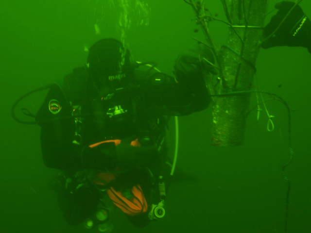 unterwasserfotos_10_20141106_1786269900.jpg
