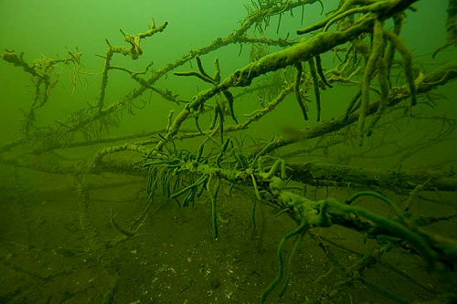 unterwasserfotos_13_20141106_1339749336.jpg