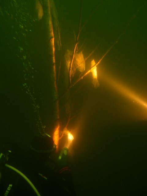 unterwasserfotos_2_20141106_1109570348.jpg